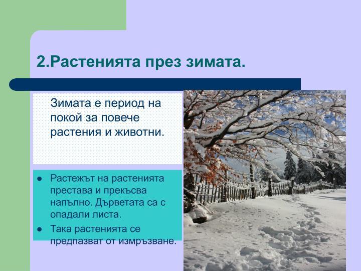 2.Растенията през зимата.
