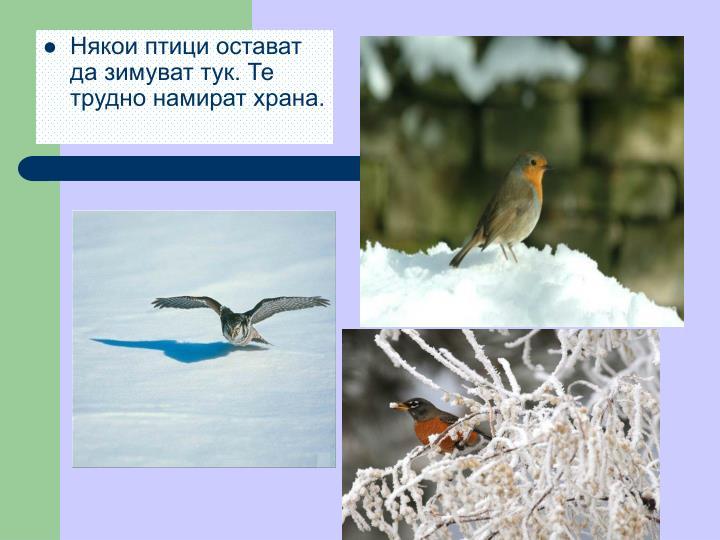 Някои птици остават да зимуват тук. Те трудно намират храна.