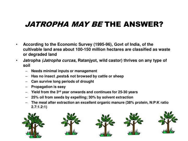 JATROPHA MAY BE