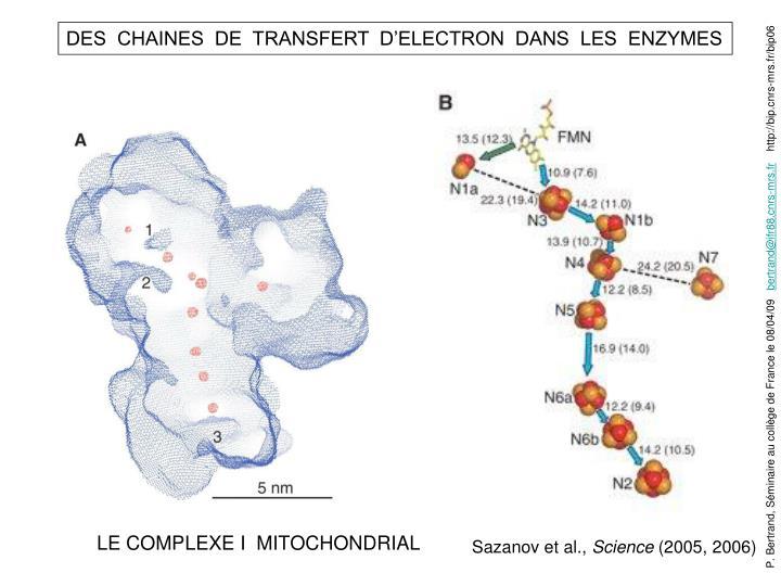 DES  CHAINES  DE  TRANSFERT  D'ELECTRON  DANS  LES  ENZYMES