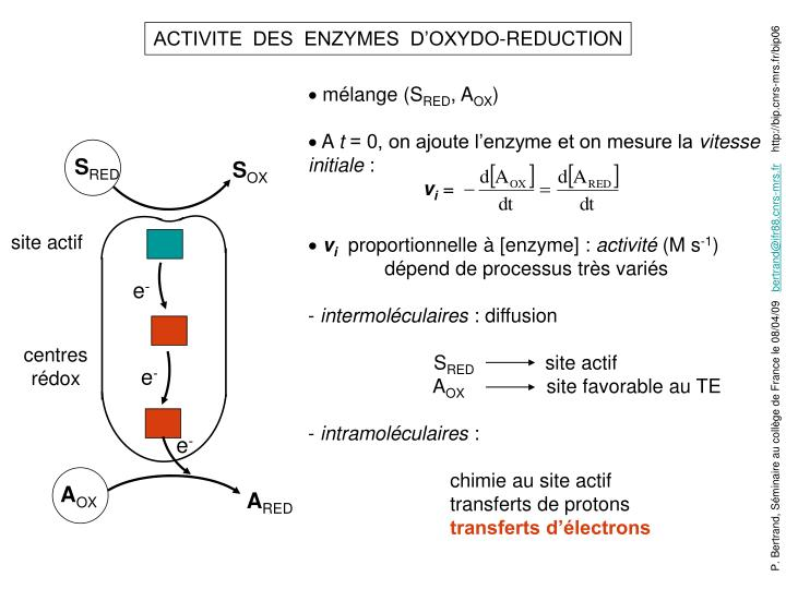 ACTIVITE  DES  ENZYMES  D'OXYDO-REDUCTION