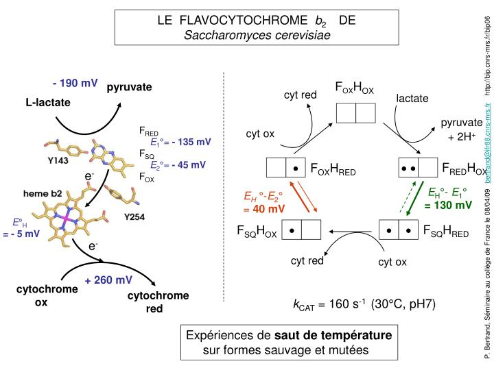 LE  FLAVOCYTOCHROME