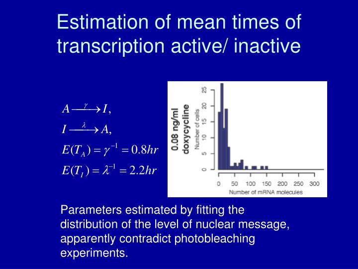 Estimation of mean times of transcription active/ inactive
