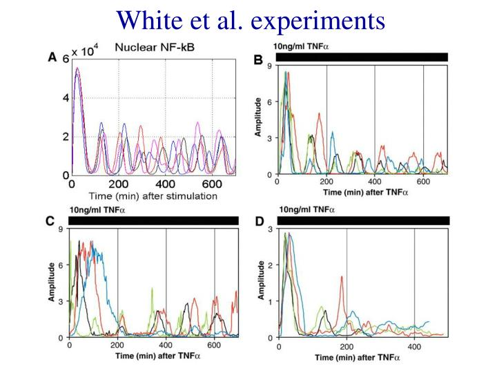 White et al. experiments