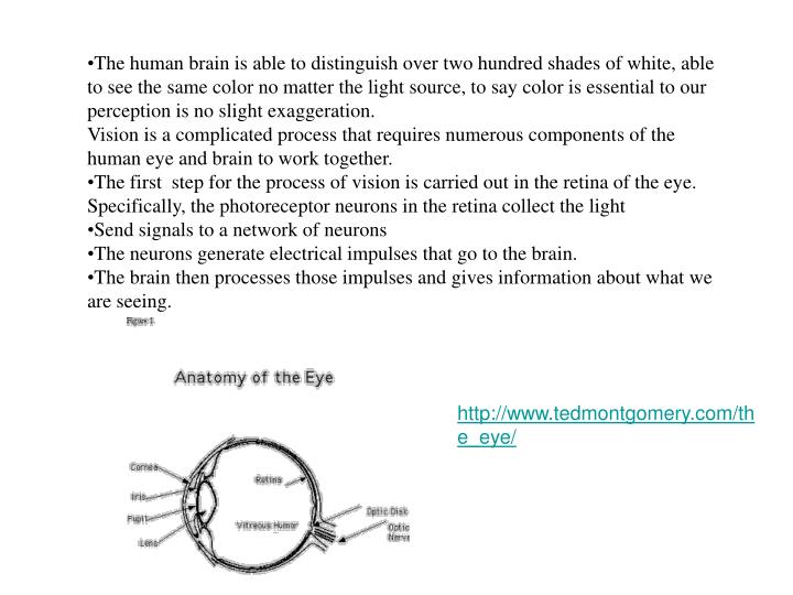 The human brain is able to distinguish over two hundred shades of white, able to see the same color ...