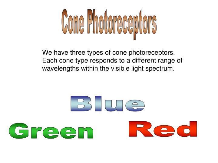 Cone Photoreceptors