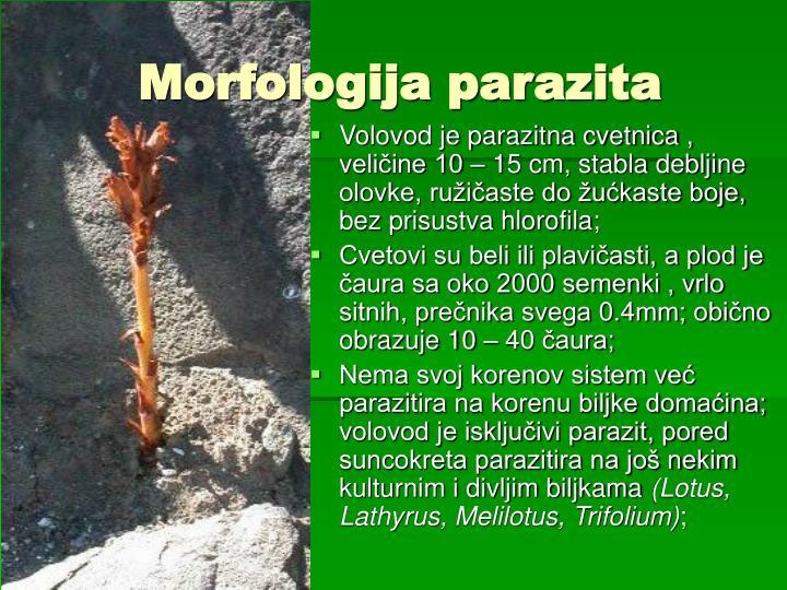 Morfologija parazita
