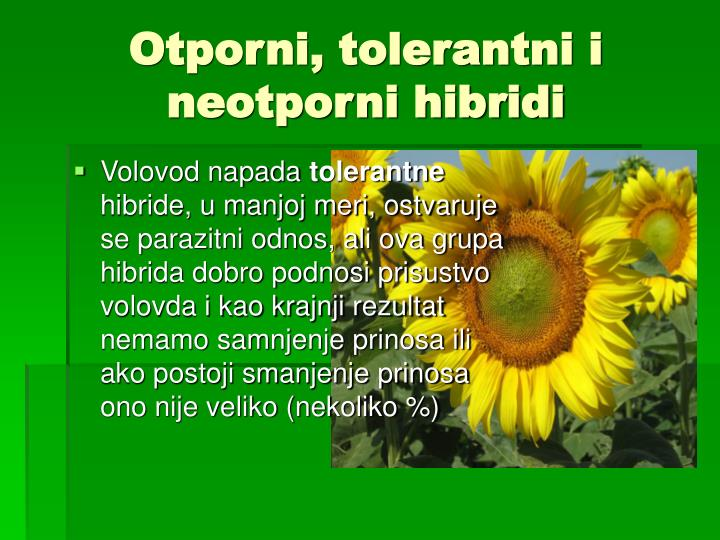 Otporni, tolerantni i neotporni hibridi