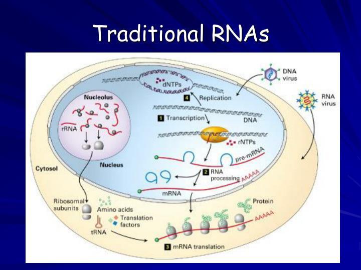 Traditional RNAs