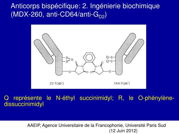 Anticorps bispécifique: 2. Ingénierie biochimique  (MDX-260, anti-CD64/anti-G