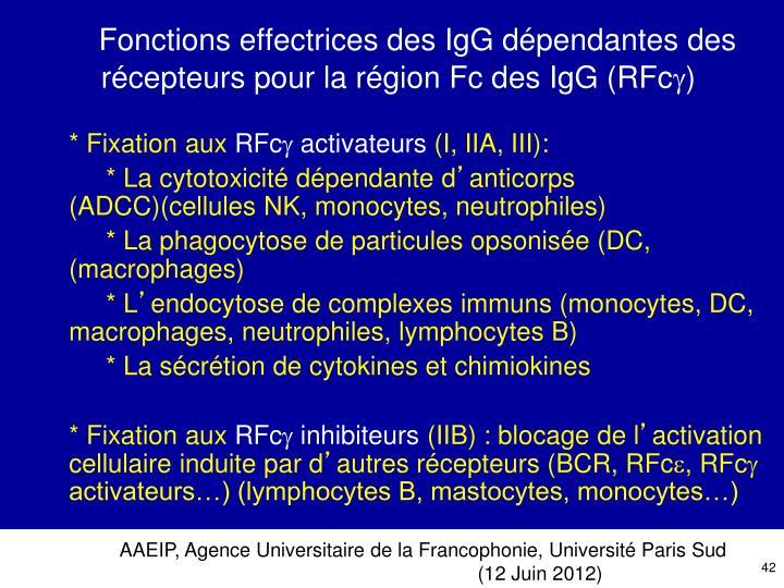 Fonctions effectrices des IgG dépendantes des récepteurs pour la région Fc des IgG (RFc