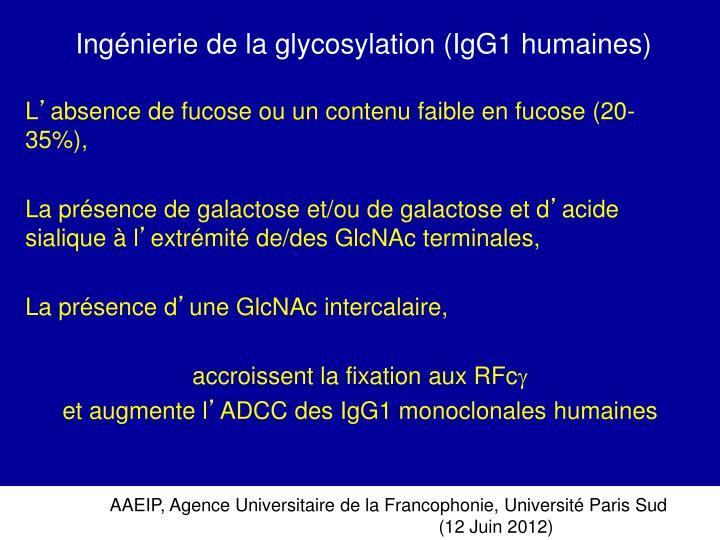 Ingénierie de la glycosylation (IgG1 humaines)