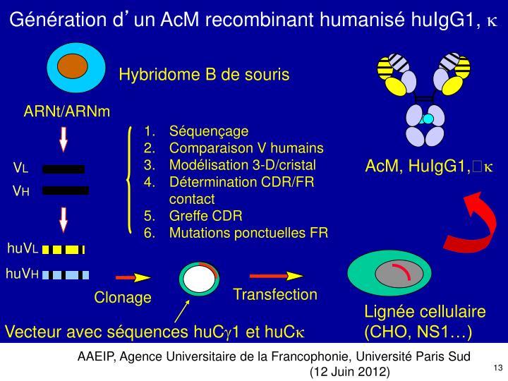 Hybridome B de souris