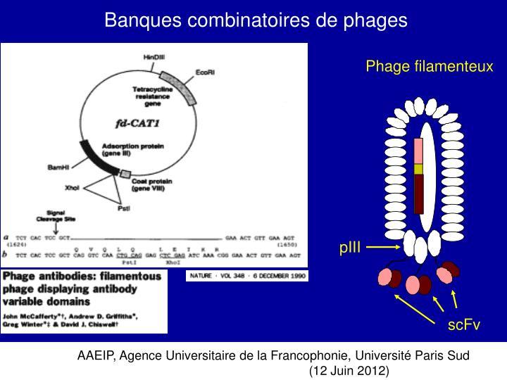 Banques combinatoires de phages