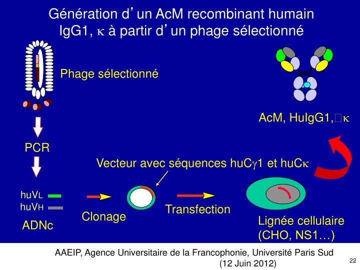 Phage sélectionné