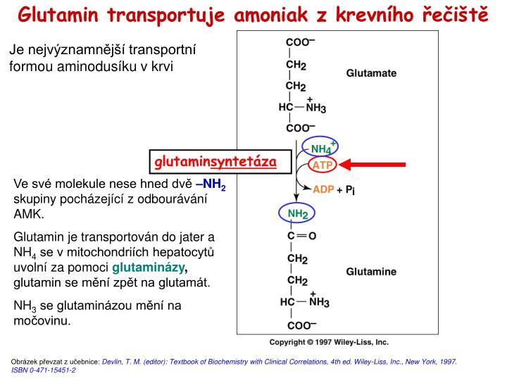 Glutamin transportuje amoniak z krevního řečiště