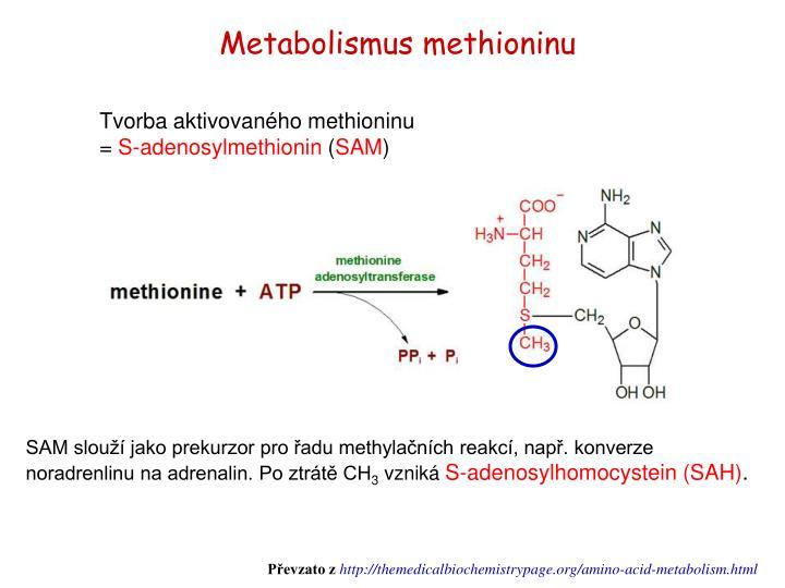 Metabolismus methioninu