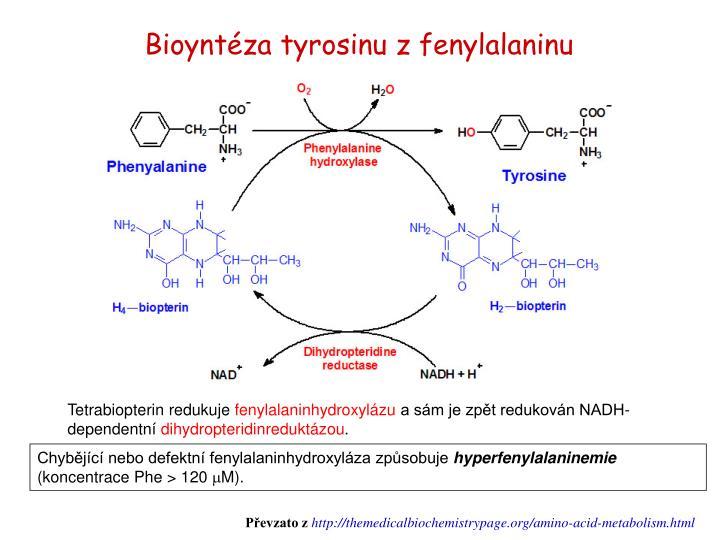 Bioyntéza tyrosinu z fenylalaninu