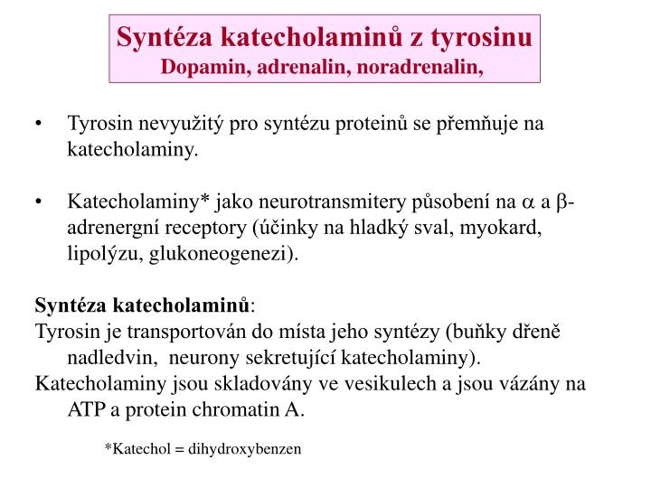 Syntéza katecholaminů z tyrosinu