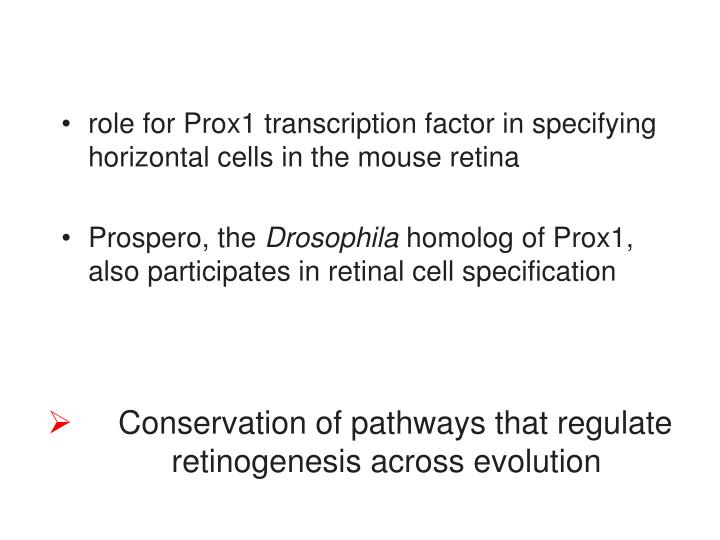 Conservation of pathways that regulate retinogenesis across evolution