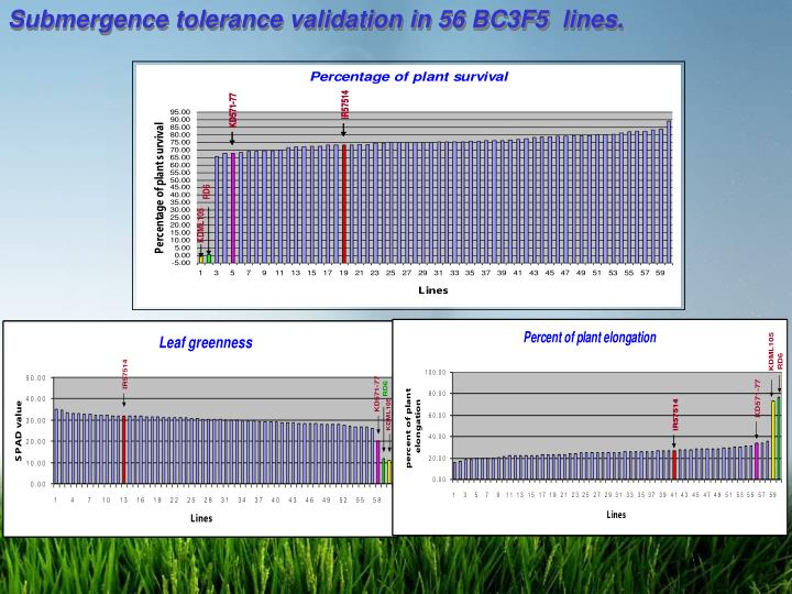 Submergence tolerance validation in 56 BC3F5