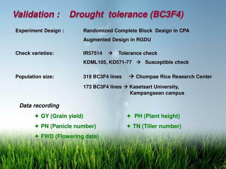 Validation :    Drought  tolerance (BC3F4)