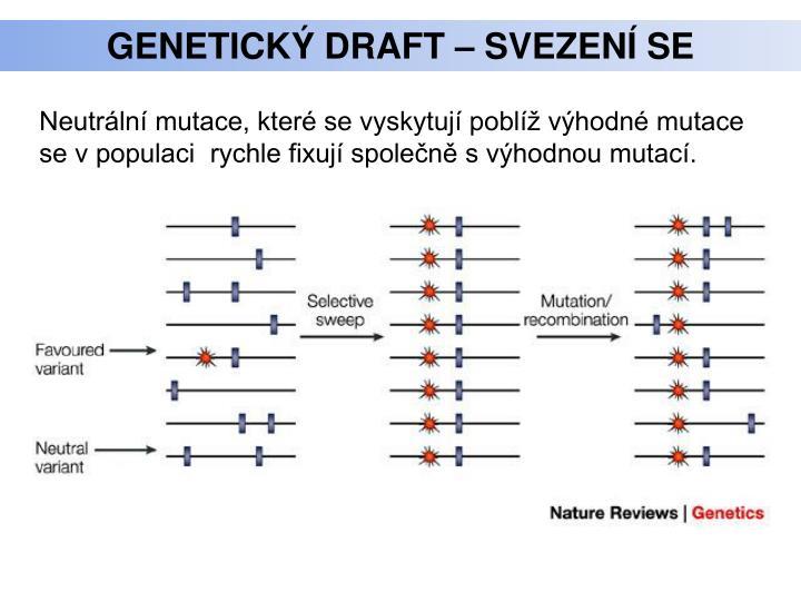 Genetický draft