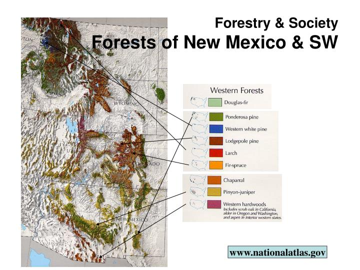 Forestry society forests of new mexico sw1