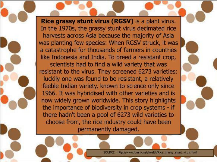 Rice grassy stunt virus (RGSV)