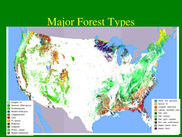 Major Forest Types