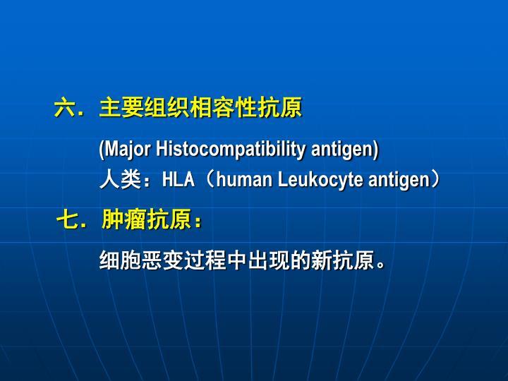 六.主要组织相容性抗原