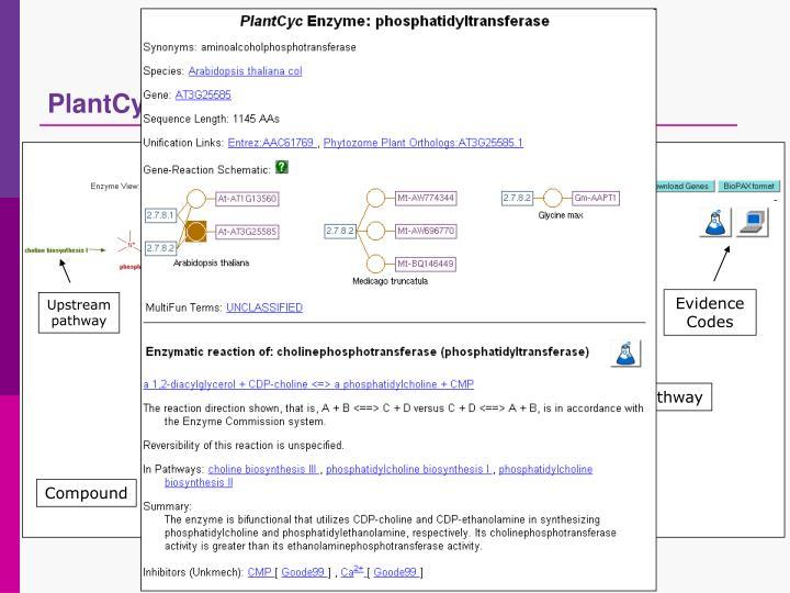 PlantCyc databases