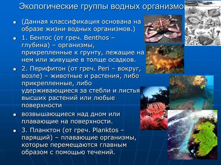 Экологические группы водных организмов:
