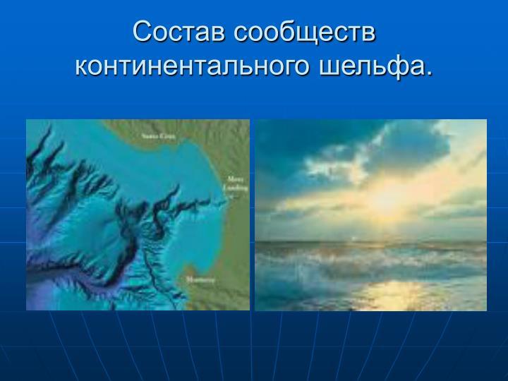 Состав сообществ континентального шельфа.