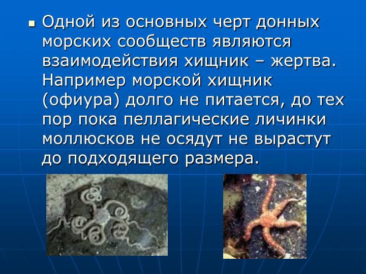 Одной из основных черт донных морских сообществ являются взаимодействия хищник – жертва. Например морской хищник (офиура) долго не питается, до тех пор пока пеллагические личинки моллюсков не осядут не вырастут до подходящего размера.