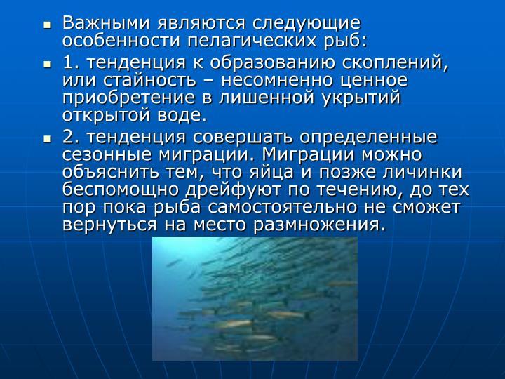Важными являются следующие особенности пелагических рыб:
