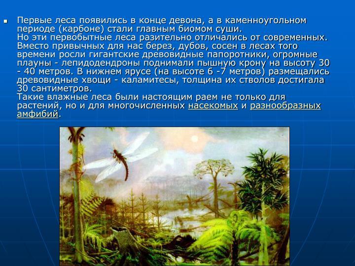 Первые леса появились в конце девона, а в каменноугольном периоде (карбоне) стали главным биомом суши.