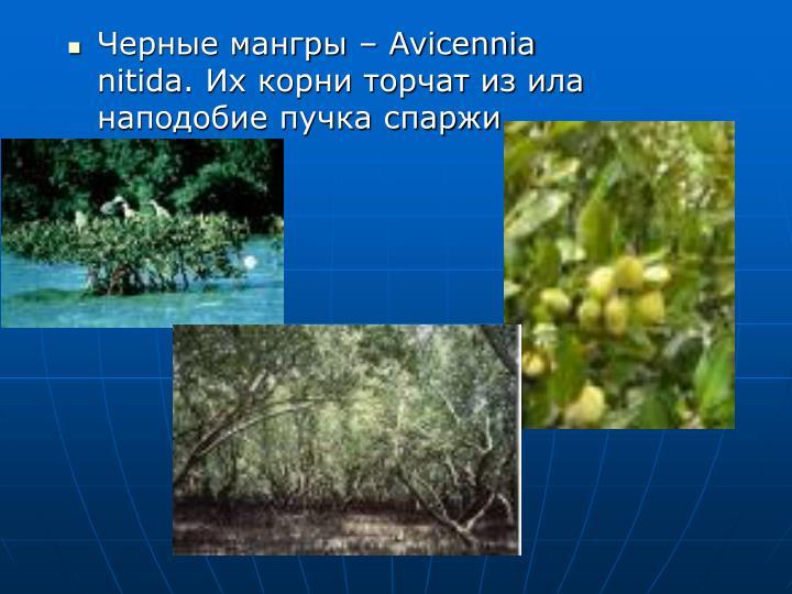 Черные мангры –