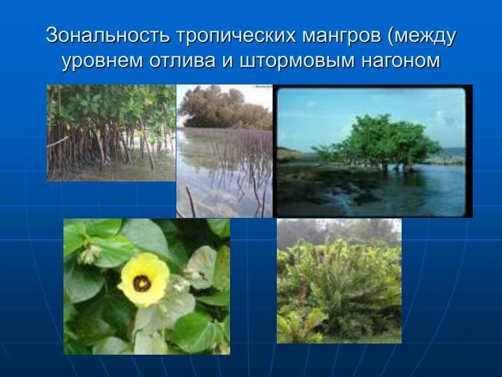 Зональность тропических мангров (между уровнем отлива и штормовым нагоном