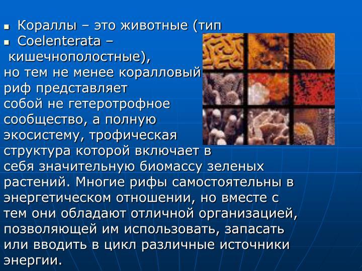 Кораллы – это животные (тип