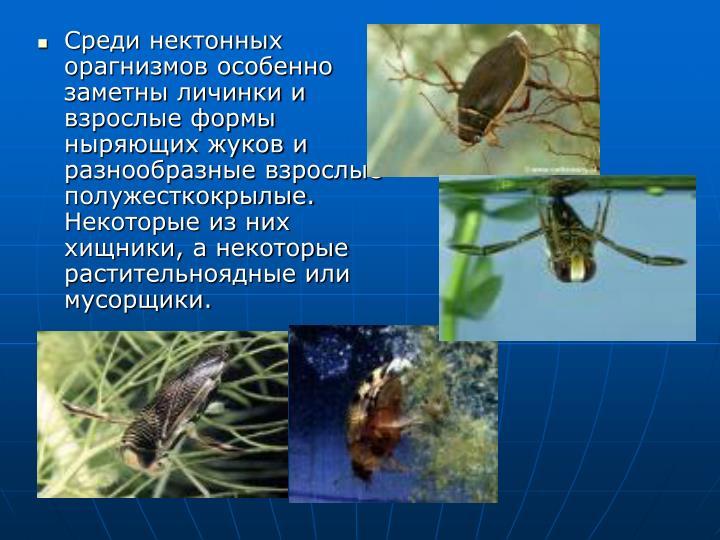 Среди нектонных орагнизмов особенно заметны личинки и взрослые формы ныряющих жуков и разнообразные взрослые полужесткокрылые. Некоторые из них хищники, а некоторые растительноядные или мусорщики.