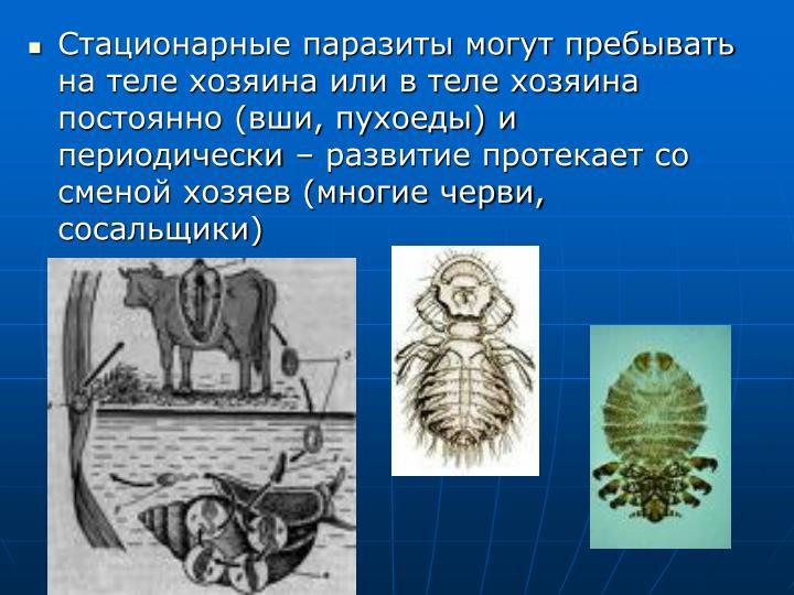 Стационарные паразиты могут пребывать на теле хозяина или в теле хозяина постоянно (вши, пухоеды) и периодически – развитие протекает со сменой хозяев (многие черви, сосальщики)