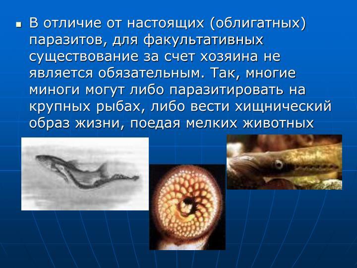 В отличие от настоящих (облигатных) паразитов, для факультативных существование за счет хозяина не является обязательным. Так, многие миноги могут либо паразитировать на крупных рыбах, либо вести хищнический образ жизни, поедая мелких животных