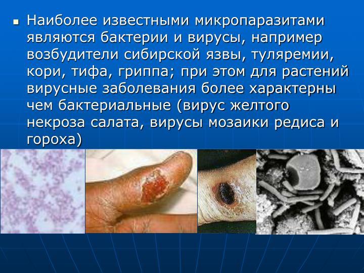 Наиболее известными микропаразитами являются бактерии и вирусы, например возбудители сибирской язвы, туляремии, кори, тифа, гриппа; при этом для растений вирусные заболевания более характерны чем бактериальные (вирус желтого некроза салата, вирусы мозаики редиса и гороха)