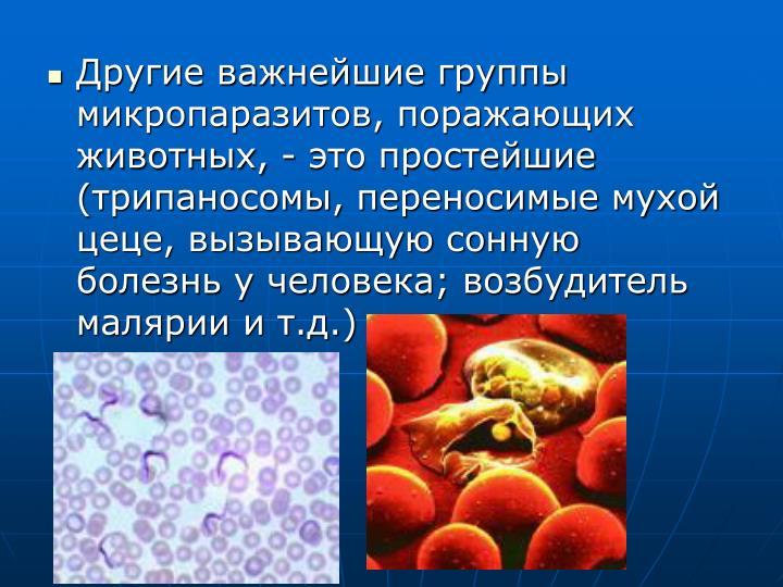 Другие важнейшие группы микропаразитов, поражающих животных, - это простейшие (трипаносомы, переносимые мухой цеце, вызывающую сонную болезнь у человека; возбудитель малярии и т.д.)