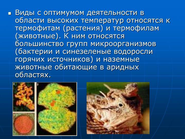 Виды с оптимумом деятельности в области высоких температур относятся к термофитам (растения) и термофилам (животные). К ним относятся большинство групп микроорганизмов (бактерии и синезеленые водоросли горячих источников) и наземные животные обитающие в аридных областях.