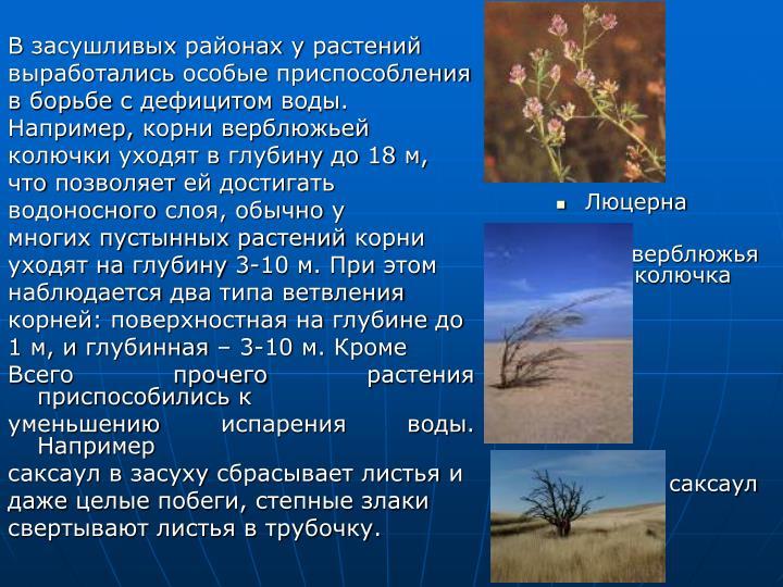 В засушливых районах у растений