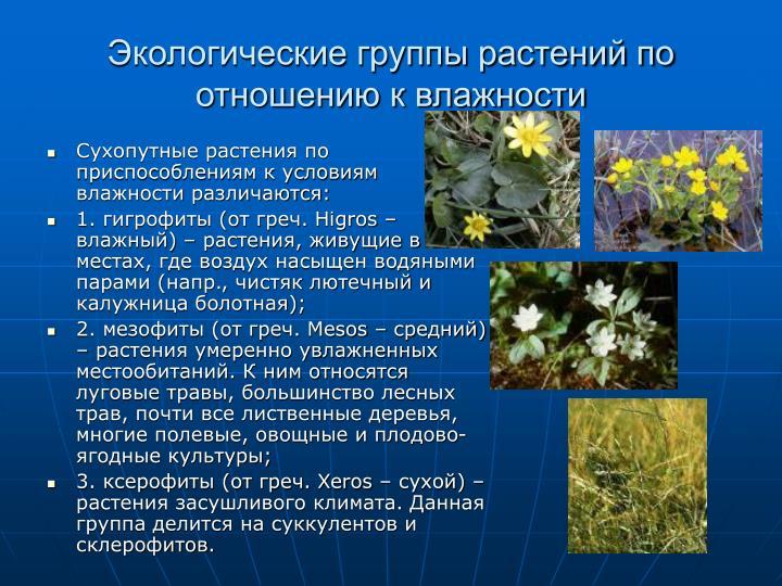 Сухопутные растения по приспособлениям к условиям влажности различаются: