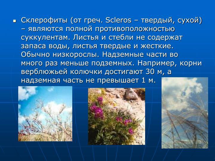Склерофиты (от греч.