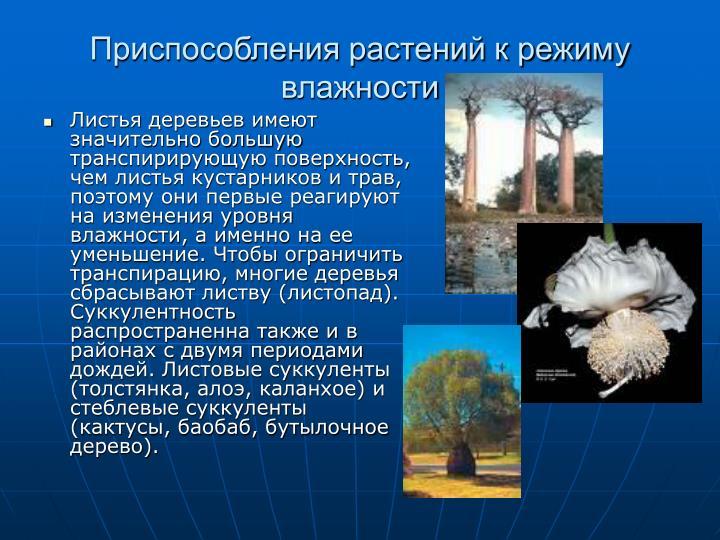 Листья деревьев имеют значительно большую транспирирующую поверхность, чем листья кустарников и трав, поэтому они первые реагируют на изменения уровня влажности, а именно на ее уменьшение. Чтобы ограничить транспирацию, многие деревья сбрасывают листву (листопад). Суккулентность распространенна также и в районах с двумя периодами дождей. Листовые суккуленты (толстянка, алоэ, каланхое) и стеблевые суккуленты (кактусы, баобаб, бутылочное дерево).